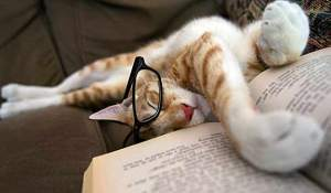 cat-asleep-reading