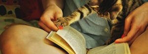 chat-livre