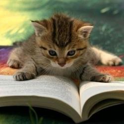 chaton-livre-carre