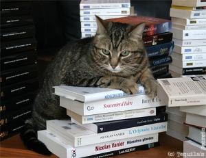 IMG_5001_chat sur une pile de livres