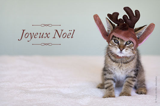 joyeux-noel-petit-chat